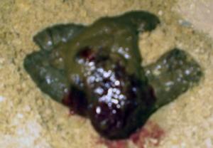 У кота прожилки крови в кале